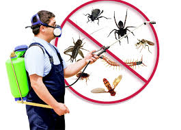 Pest Inspections in Melbourne